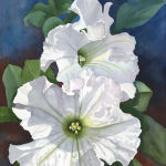 Two White Petunias Original Watercolor by Shirley Lehner-Rhoades