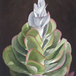 Spiral Succulent (Flapjack Plant) Original Watercolor by Shirley Lehner-Rhoades