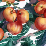 Ranier Cherries on Green Cloth. Original Watercolor by Shirley Lehner-Rhoades