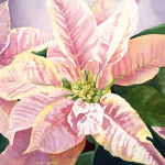 Pink Poinsettia Original Watercolor by Shirley Lehner-Rhoades
