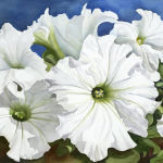 White Petunias Original Watercolor by Shirley Lehner-Rhoades